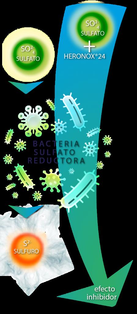 EFECTO INHIBIDOR BACTERIA SULFATO RADUCTORA