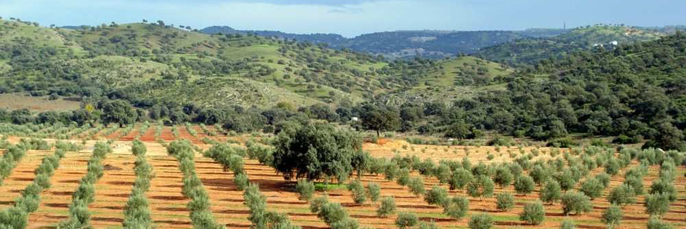 herosol-especial-olivo